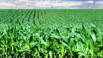 Asigurarea agricola cu prima subventionabila