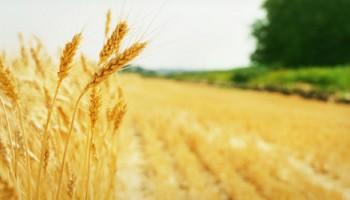 Asigurare agricola